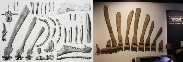 SpinosaurusHolotype
